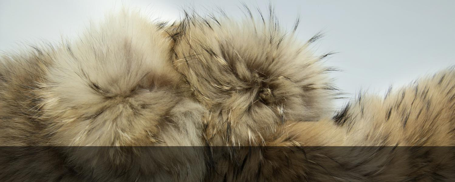 Quality fur will last for decades if you just remember the following simple rules for care